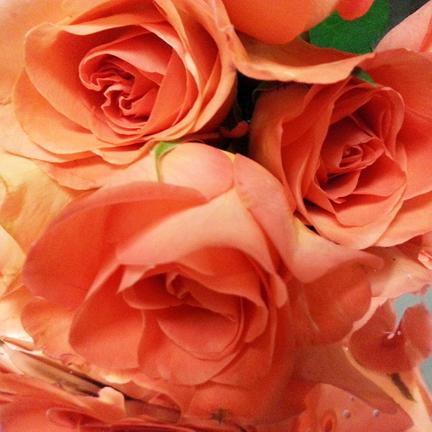 Rose 6x6