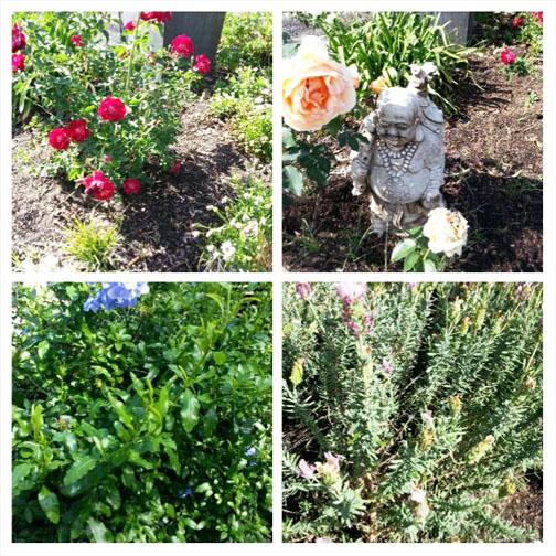 Front garden 4 panel